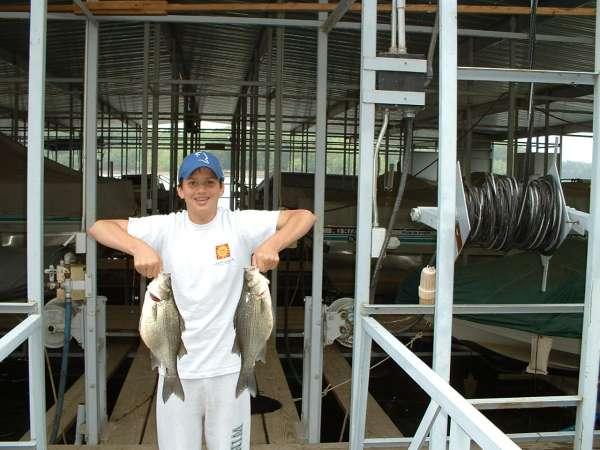 2 HUGE white bass fish
