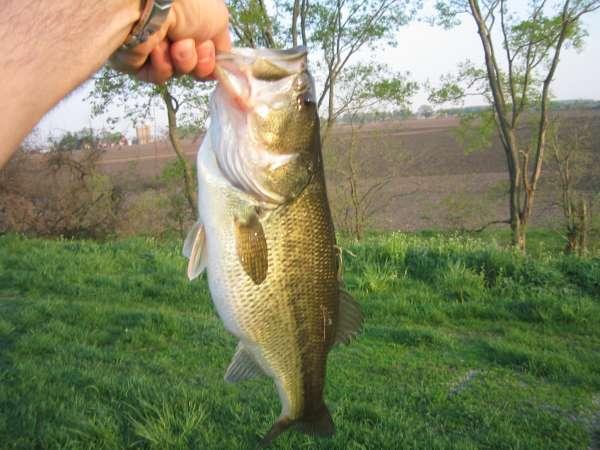 B Town Lunker fish