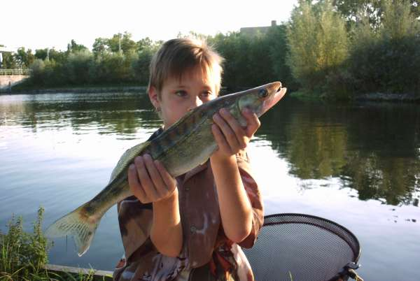 My first Fish fish
