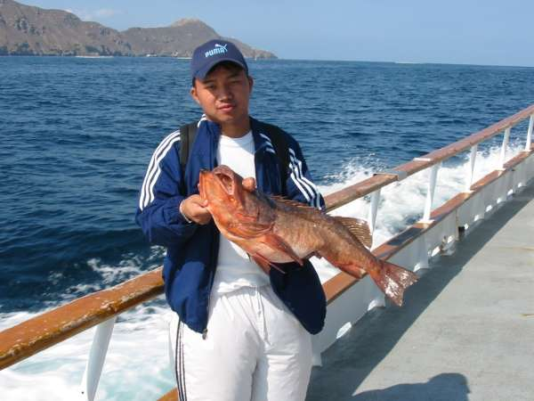 Danny and Grouper fish