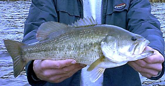 Fat Hawg! fish