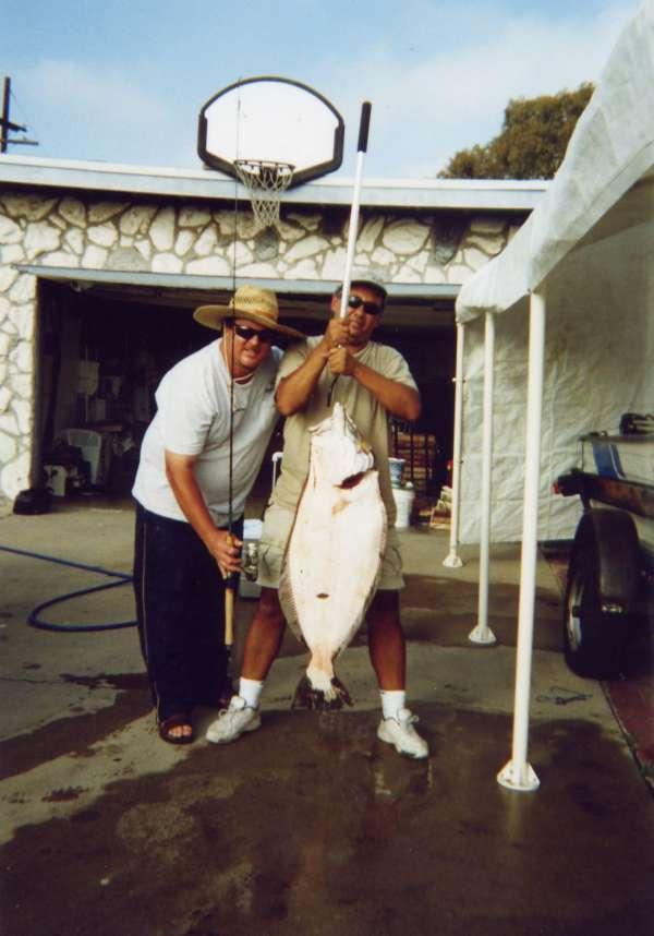 31.3 lb Halibut fish