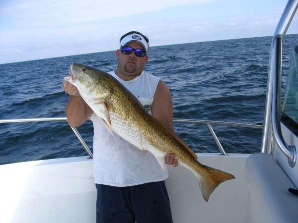 off shore redfish fish