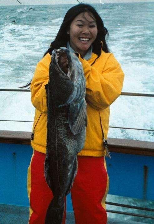 lingcod fish