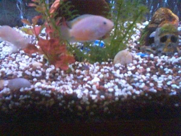 Pinky fish
