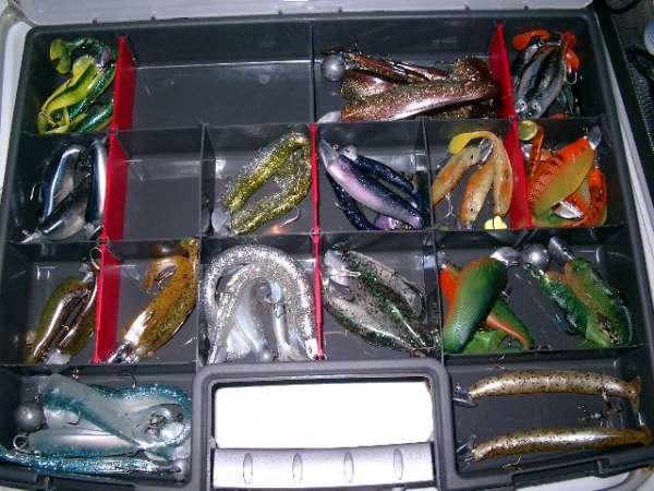 my fav shads fish