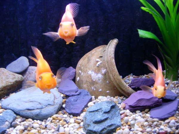 Looking at you, Looking at Me... fish