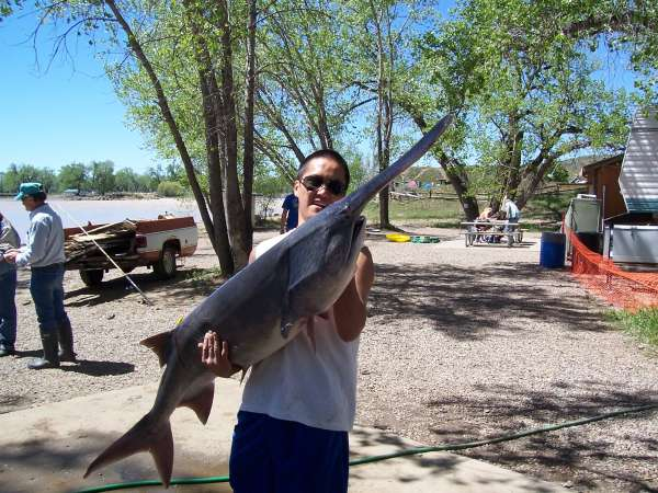 60 lbs. paddlefish fish