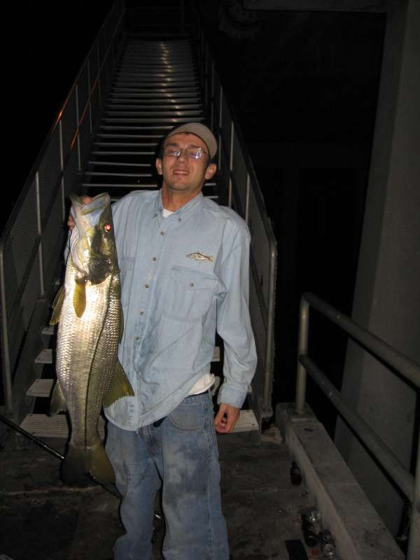 snook fish