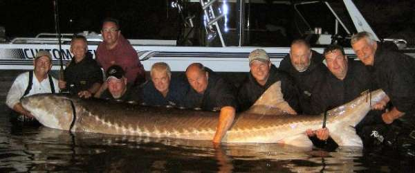 CA Delta Sturgeon fish