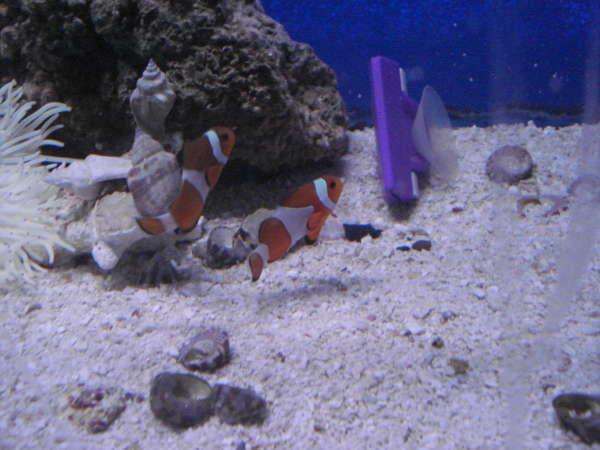 The Aquarium store fish