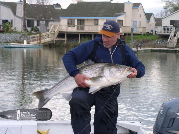 Discovery Bay CA Striper fish
