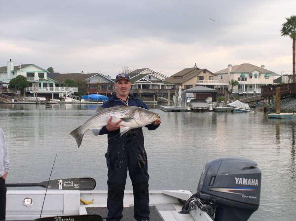 Discovery Bay CA King Salmon fish