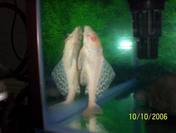 102_0673 fish
