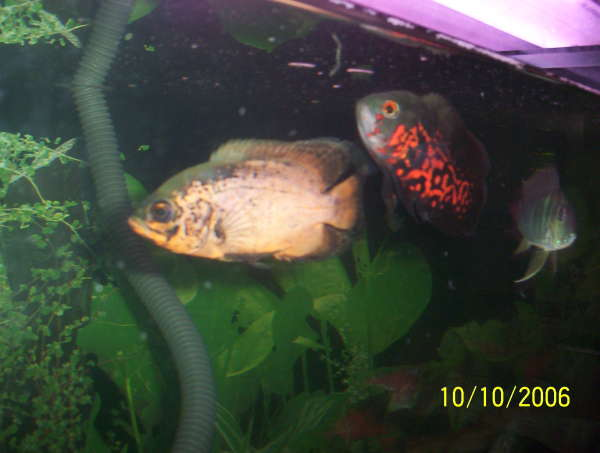 102_0702 fish