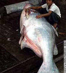 my giant fish i got this 1 at age 10! fish