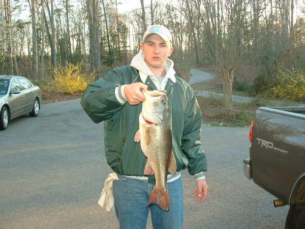 7.5 bass fish