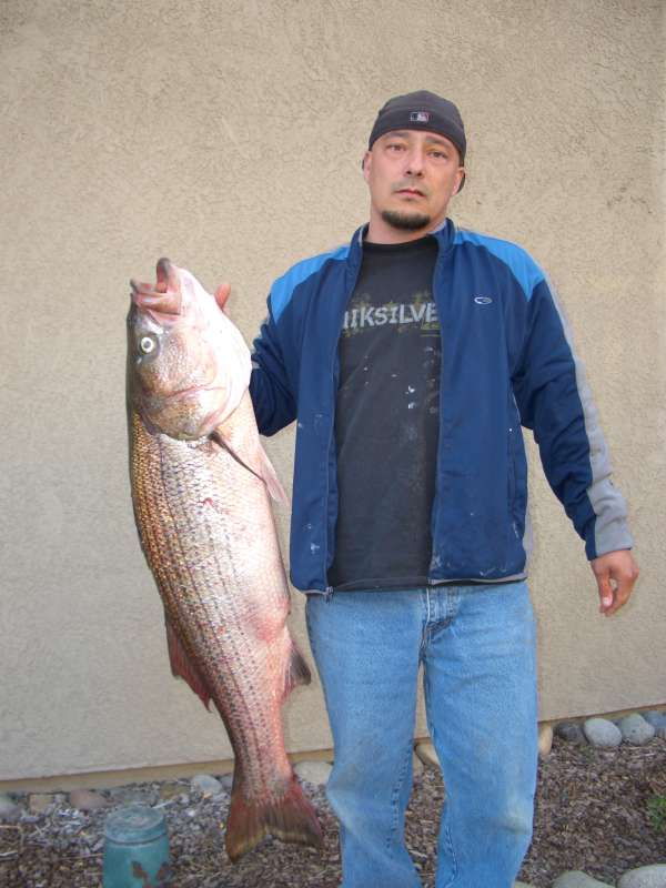 Big ol' striper fish