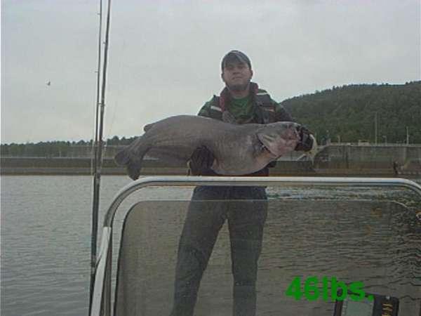 Guntersville Dam fish