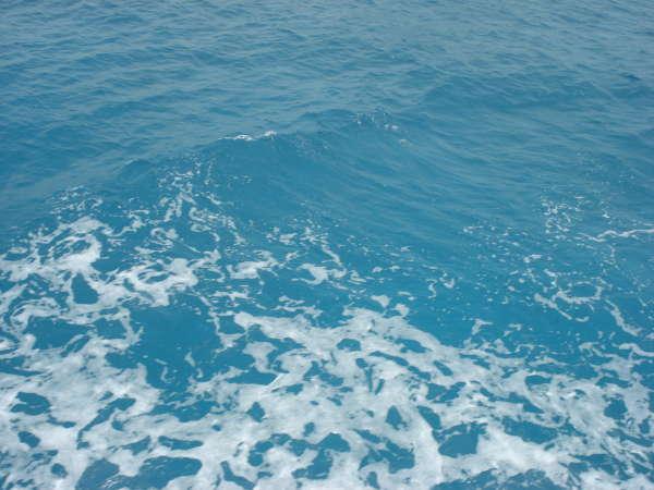 Blue Atlantic Waters fish