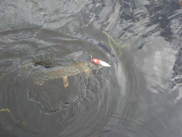 another  on a topwater fish