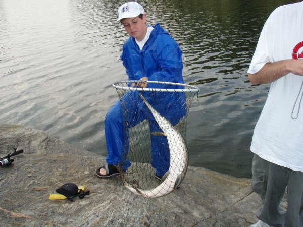 big spotted gar ! fish
