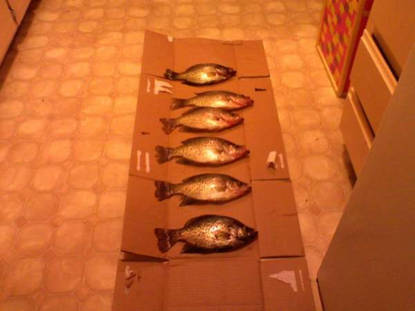 Crappie, Crappie, Crappie fish