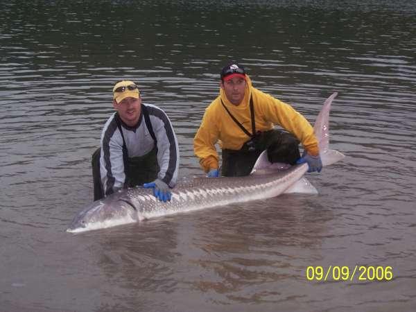 8 feet fish