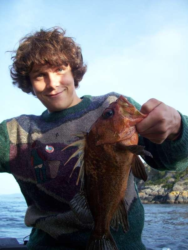 rock fish fish