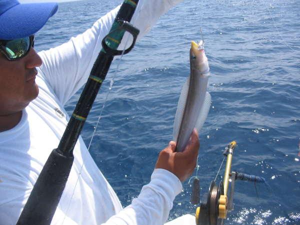lizard fish fish