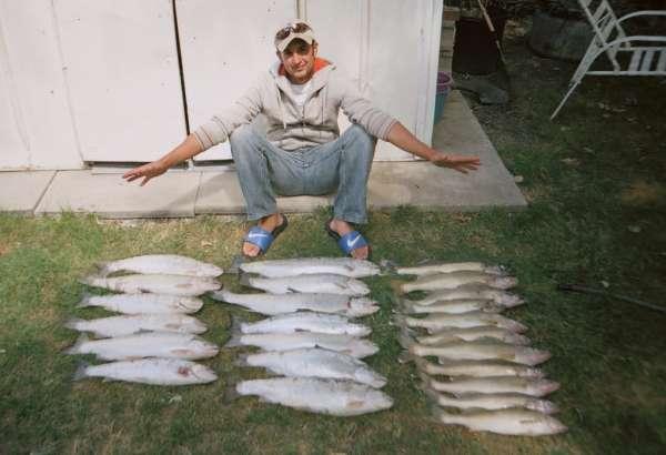 Steelheads and Walleyes fish