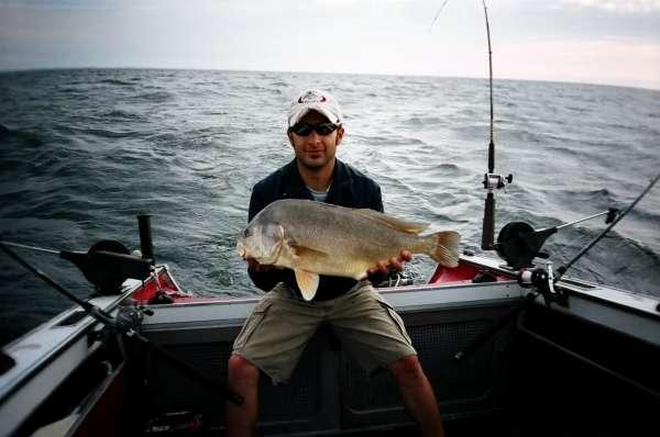 9LB Sheephead fish