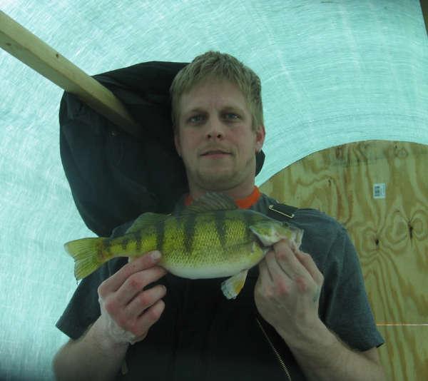 FATTY PERCH fish