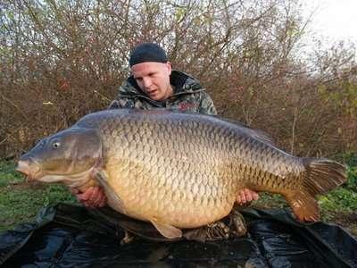 REALLY BIG CARP fish