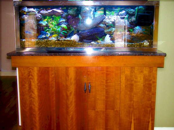 My Tank fish