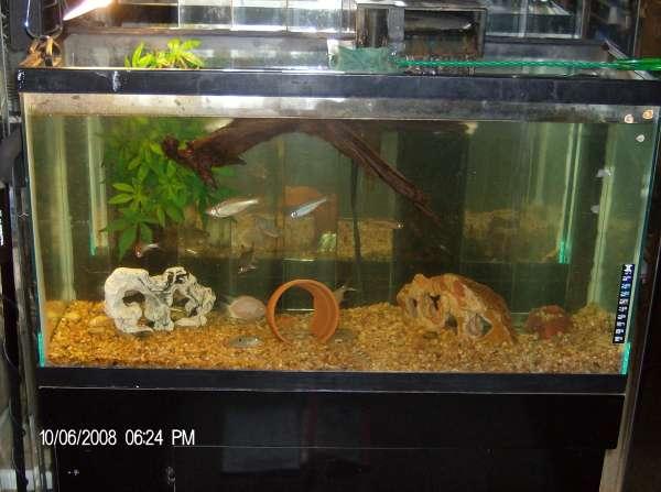 My old 38 gal fish