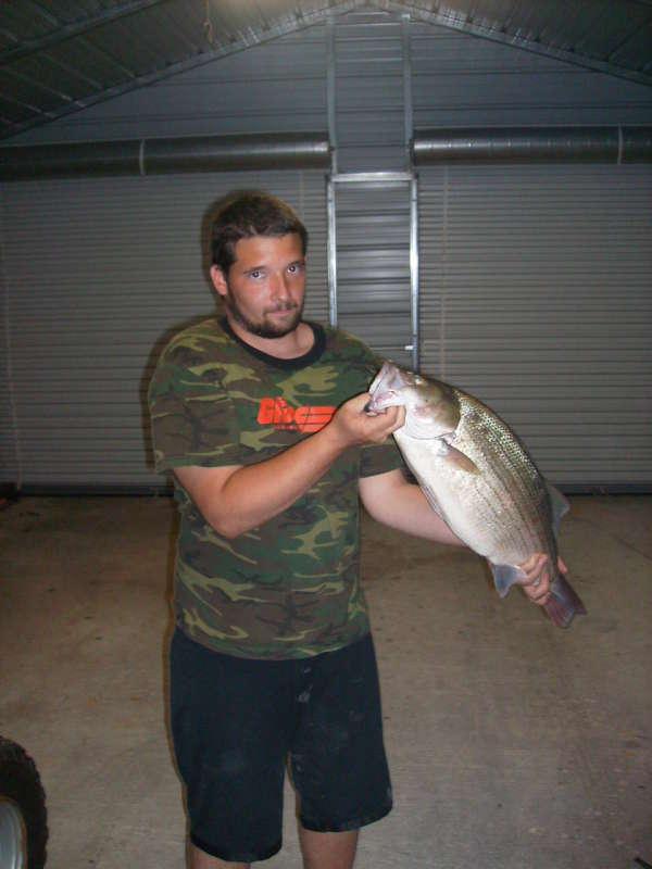 big hybrid stripe fish