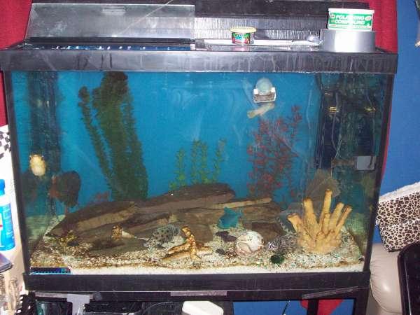 new 65 gallon upgrade fish