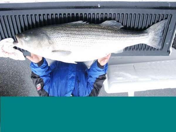 61 lber fish