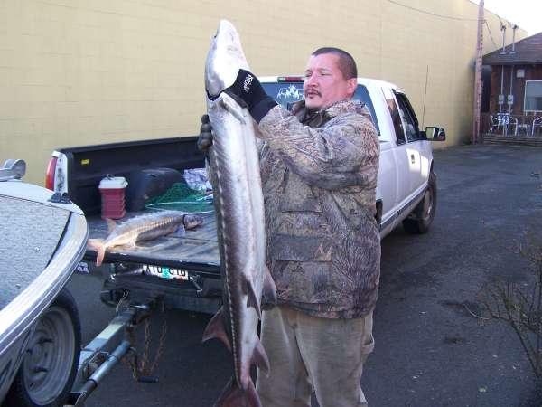 "54"" sturgeon 67 lbs fish"