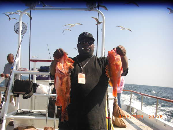 nice grouper fish
