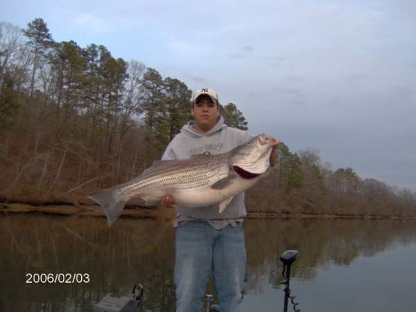 Arkansas Striper  43 lbs fish