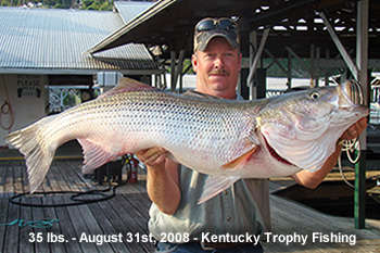 Kentucky Striper fish
