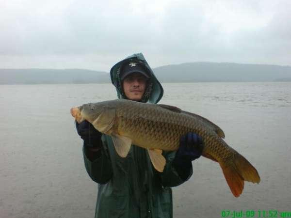 Monster Carp from hot spot fish