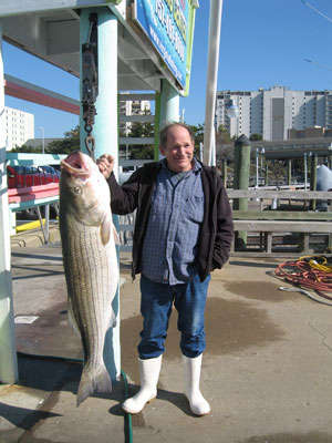 73 lb VA Striper fish