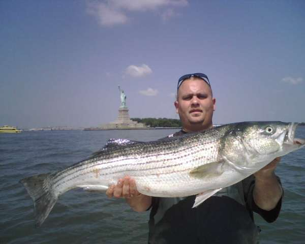 Statue of Liberty Striper fish