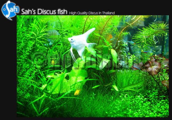 Aquarium Fish fish