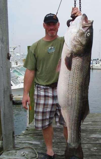 68# Striper fish