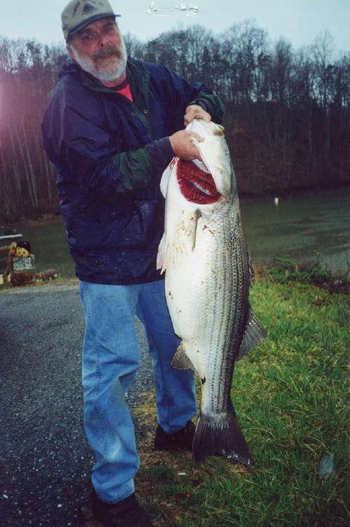 Virginia Freshwater Record Striper fish