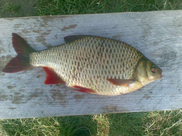 Hugh Rudd fish